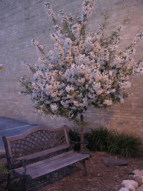Port Washington tree