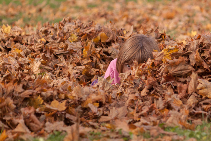 Lily playing (and hiding) in leaves. Milton, WI