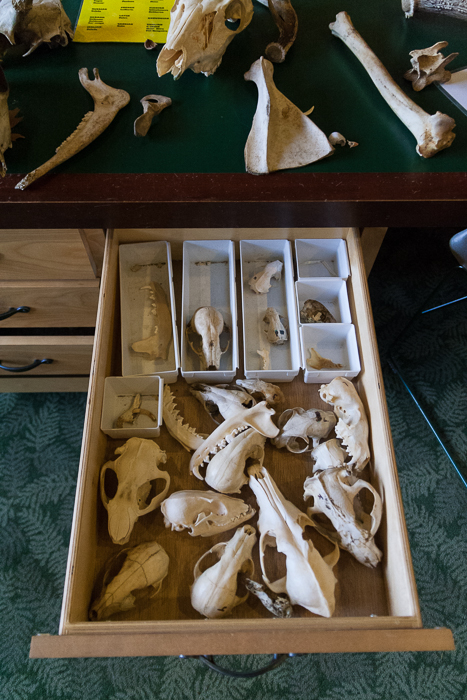sometimes, there's a drawer full of skulls