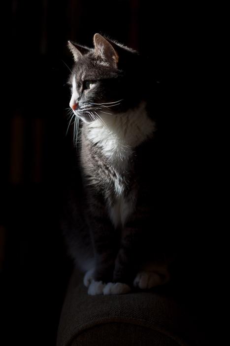 Figaro seeking out the morning sun.