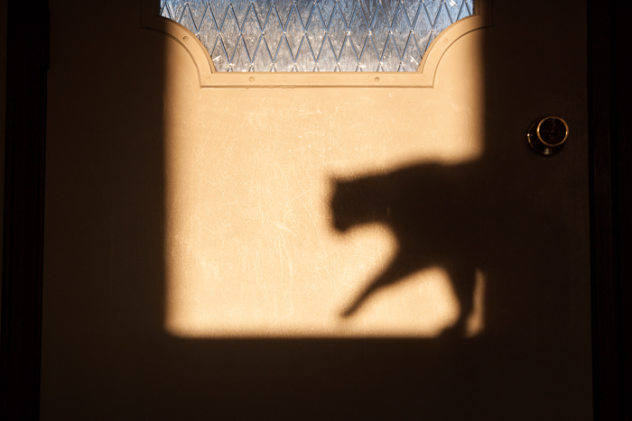 Figaro's shadow cast onto the back of our front door at sunset.