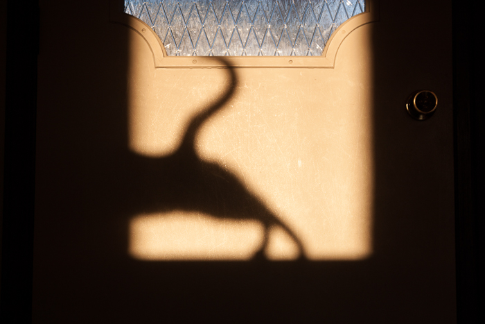 Part two of Figaro's shadow cast onto the back of our front door at sunset. :)