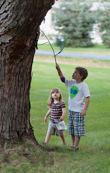 Nate helping Lily collect cicada shells from a silver maple tree.