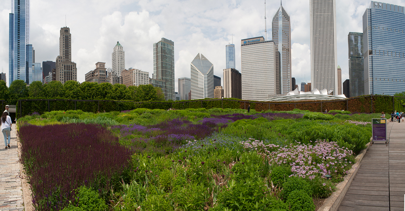 Multi-photo stitched panorama shot of the Luri Gardens at Chicago's Millennium Park in early June.