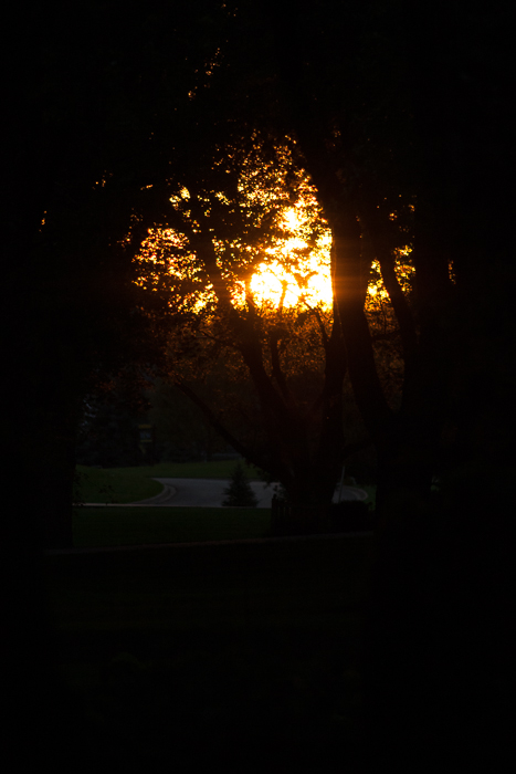 One downsides to living in a neighborhood with lots of big trees: This is as good as  it gets for sunsets. :)  Crystal Lake, IL