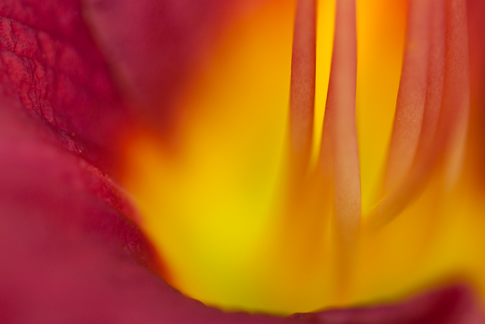 Detail of one of my favorite lily flowers from our yard.